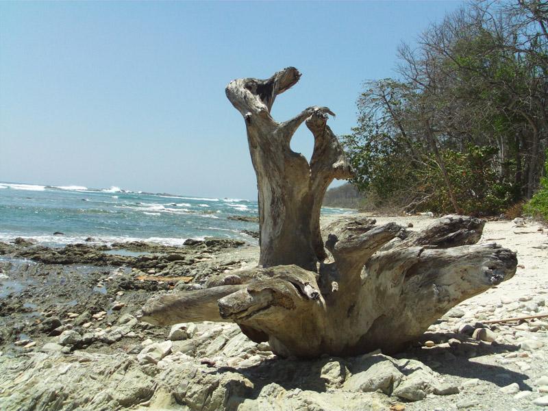 Cabo Blanco Nature Reserve, Nicoya Costa Rica