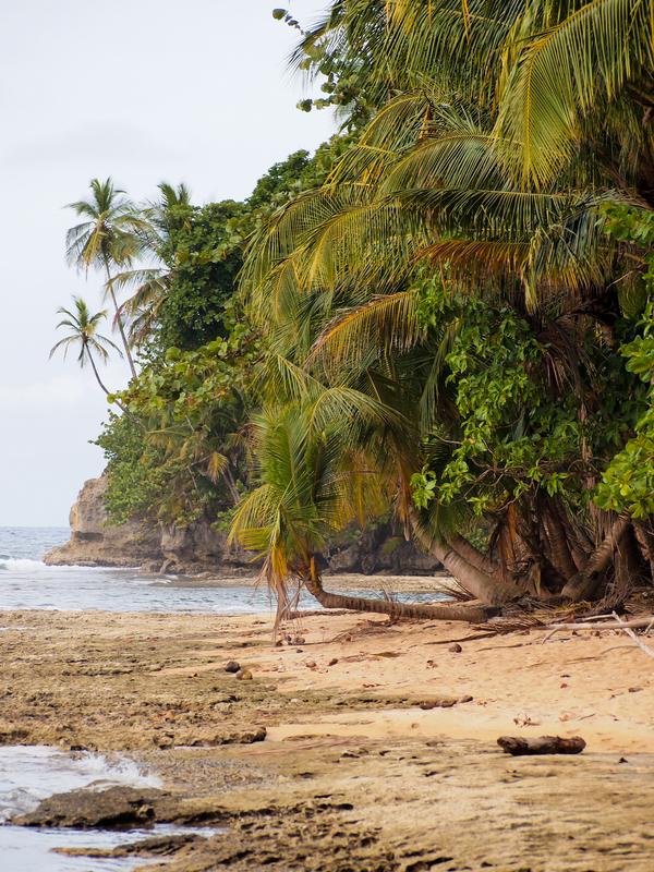 Manzanillo Coast, Caribbean, Costa Rica