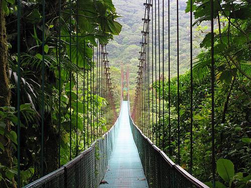 Suspension Bridge, Moteverde Cloud Forest Reserve, Costa Rica
