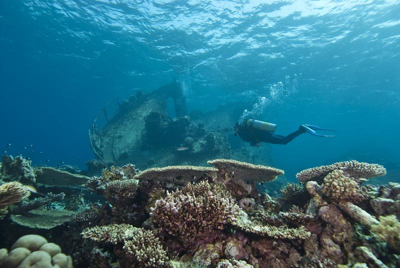Diving Sharm el Sheikh, Egypt