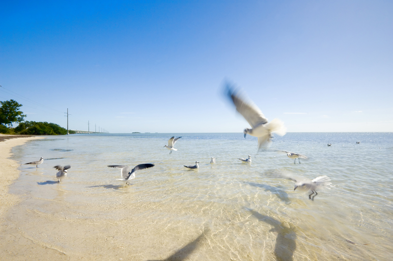 Little Duck Key - Beach, Marathon, Florida