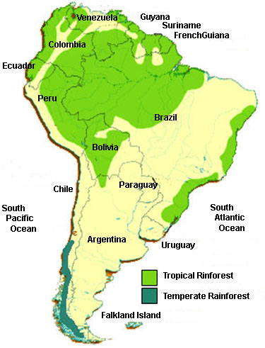 rainforest south america rainforest map of rainforest