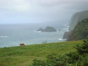 North Kohala,Hawaii