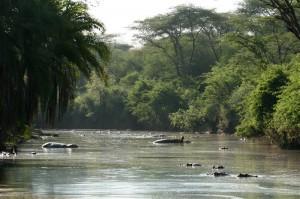 Serangeti Safari, Tanzania