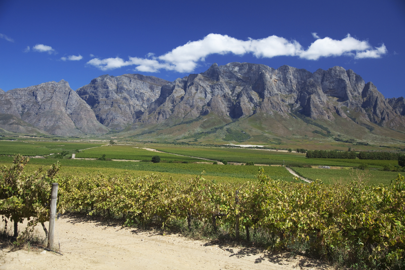 Stellenbosch Winery, Cape Town South Africa