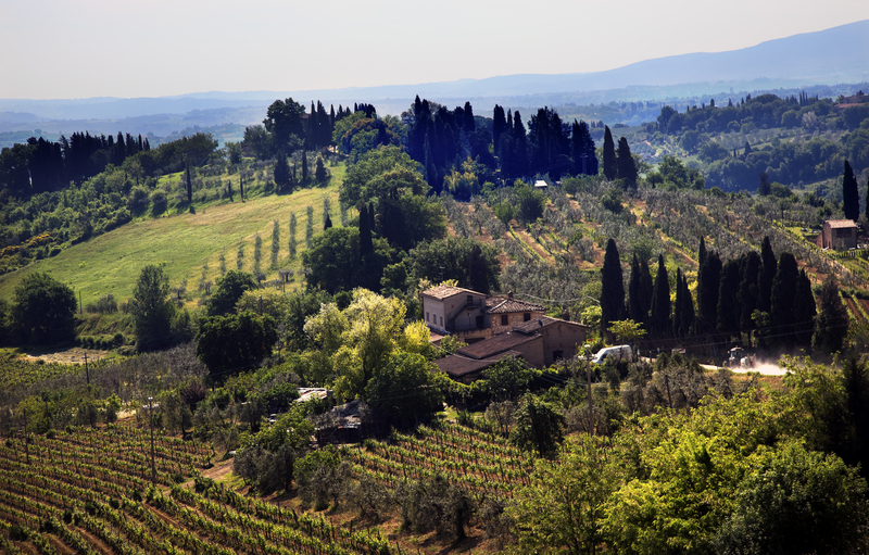 Rolling Hills and Tuscany Vineyard, San Gimignano, Italy