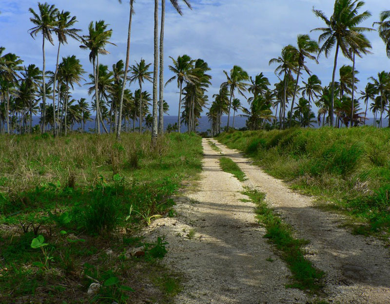 Road Through Palm Trees, Tonga