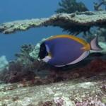 Scuba Diving India
