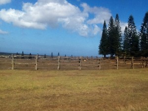 Norfolk Pines Lanai, Hawaii