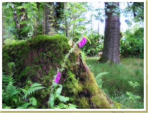 Pretty Bell and Moss Covered Tree Trunk, Scotland  Photo by R.E. Kongaika