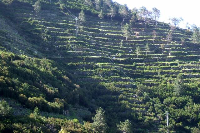 Terraced hillsides in Manarola Cinque Terre, Italy