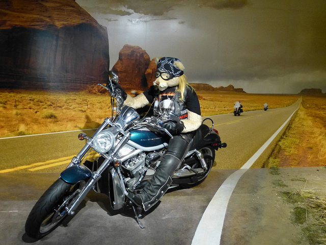 Harley Bear, Bear World Museum Hawaii, Photo by R. Kongaika