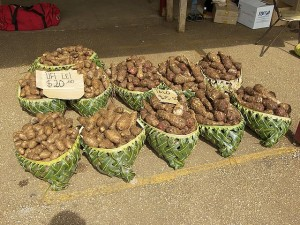 Ufi lei and talo (root crops in Tonga)