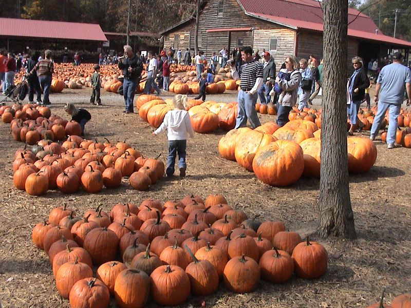 Pumpkins, pumpkins and more pumpkins, Georgia