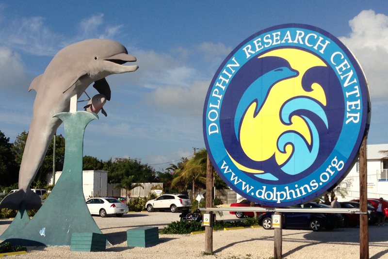 Dolphin Research Center Florida Keys