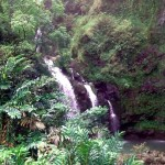 One of the many waterfalls along the road to Hana. This one you could see from the main highway